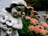 angel22.jpg
