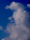 Profile of Zeus