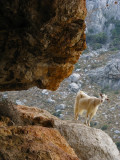 Stone shepherd & goat