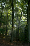 25_Sep_09 - Larochette Woods