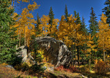 Aspens with Boulder