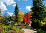Fall at Betty Ford Alpine Gardens