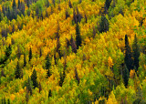 Fall Colors Above Vail