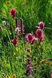 Long Lake Wildflowers-2