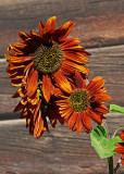 Terracotta sunflowers