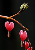 Hearts on a Curve