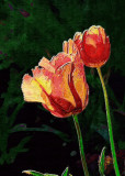 All About Tulips