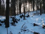 nordic_logging