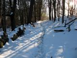 Sun, snow, and trees