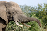 Elephants of Lion Sands 2009