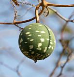 Wild Calabash - Lagenaria sphaerica