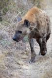 Hyena Stroll