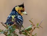 Birds of Lion Sands