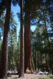 at Mariposa Grove