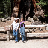 Cynthia, Dee, and the Grizzly Giant
