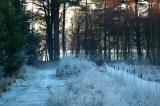 Frosty  path...