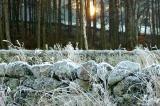 Frozen moss...