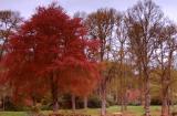 Big Tree,Little seat...