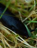 Slug...