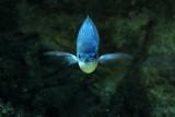 Go fish! blue fish!