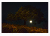 Pine ,moon and lamplight