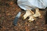October Is  Chantrel Mushroom Season