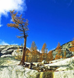 Larch And Sky