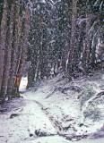 Hiking In  Wet  Fall Snow   Around Chinook Pass Area
