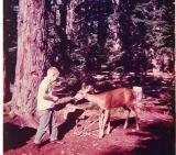 Monte feeding chip to Deer , Mt. Rainier ( 1964)