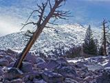 PCT in the Sierras