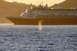 Cruise Ship Passing A Gray Whale