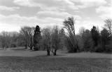 Curtis Arboretum Early Spring
