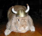Riley The Viking!