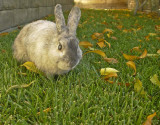 Yummy green grass and leaves!