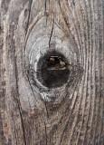 Knothole