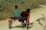 Boy riding a pony trap, Gozo Island