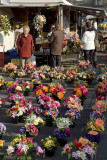 Cut flowers at St-Hilaire-du-Harcouet