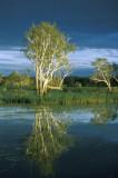 Paperbark, Yellow Waters, Kakadu NP