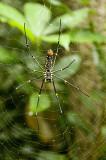 King-size spider