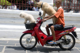 Doggy riders