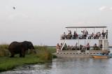 Elephant viewing, Chobe