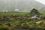 The Antarctic Division station, with elephant seals