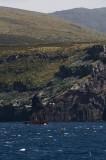 Campbell Island Albatross rookery
