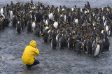 Posing with King Penguins (3)