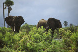Elephants at the Rufiji