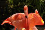 Audubon Zoo and River Birds