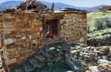 The sheep of Bino among the ruins