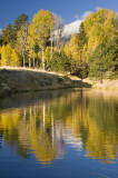 Flagstaff Fall Color 9