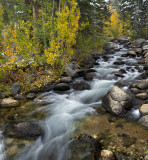 Bishop Creek - South Fork 3