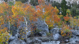 Bishop Creek Canyon Fall Color 3